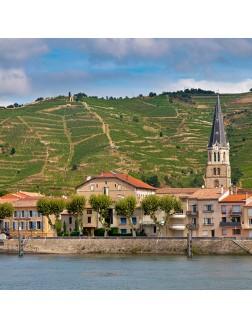 Vins mythiques de la vallée de Rhône septentrionale : Hermitage/Côte-Rôtie/Cornas