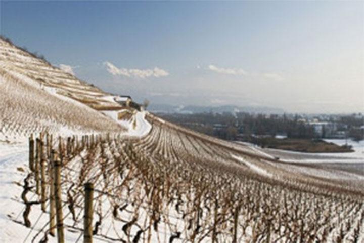 Les coteaux de Savoie