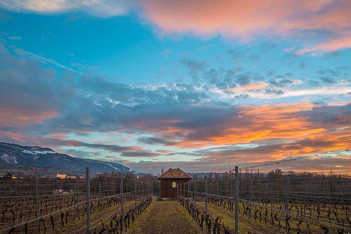 Vignes de cabernet degustationsdevins.com