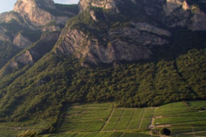 Les vignobles de Montmélian degustationsdevins.com