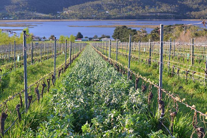 Culture de vins bio et biodynamie