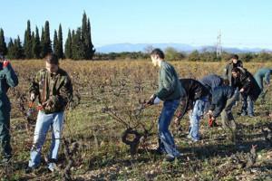 Dégustation de vin et cours d'œnologie : saisonniers taillant la vigne