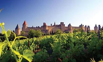 cours doenologie et degustation de vin AOC Vins du Languedoc vignette