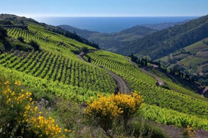 Languedoc-Roussillon: les terroirs de la méditerranée