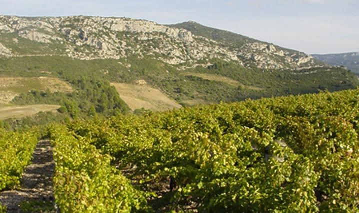 cours doenologie et degustation de vin Corbières Boutenac Languedoc-Roussillon