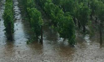 le vignoble bourguignon victime d'orages