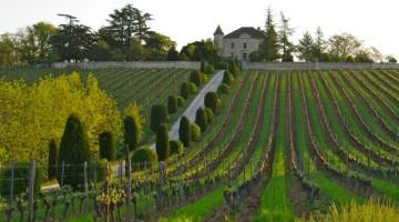 Les pratiques de la biodynamie séduisent de plus en plus de vignerons