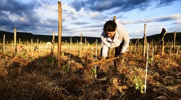 Le travail du sol dans le domaine de Mas Foulaquier