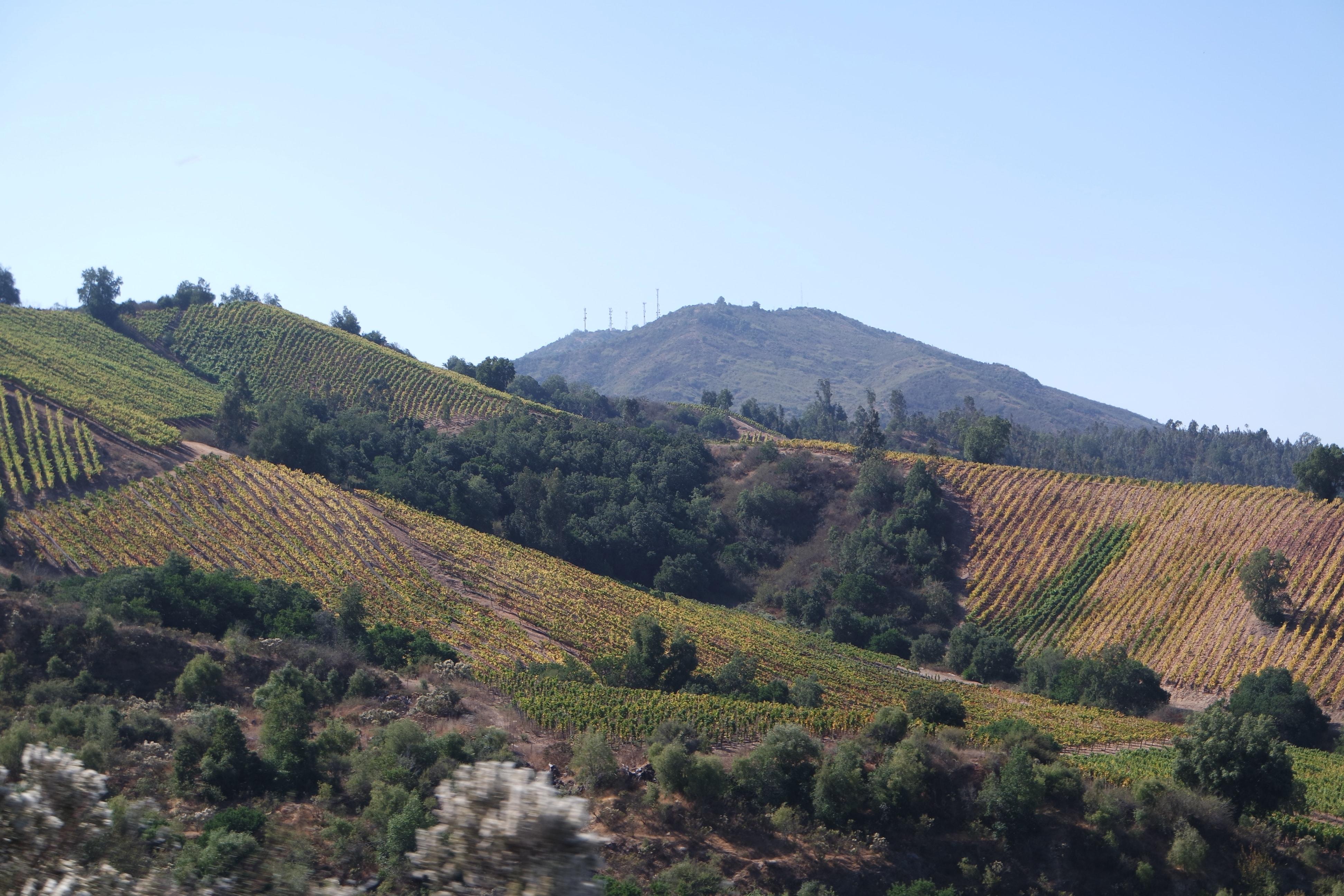 Usage du glyphosate dans les vignes