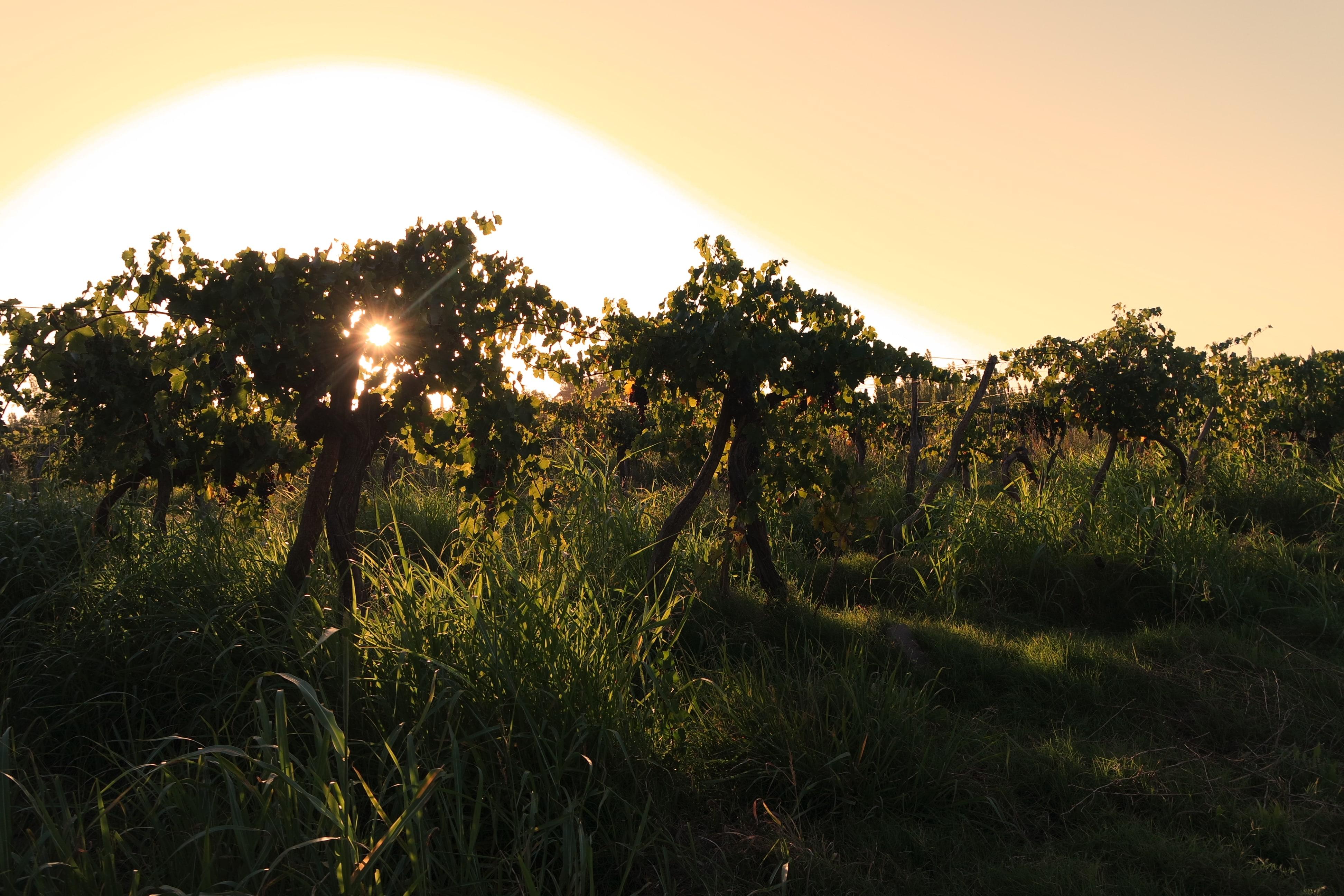 glyphosate et agro-écologie