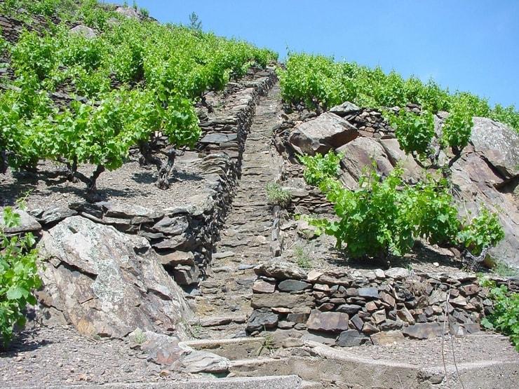 Banyuls est une appellation connue pour ses vins doux naturels