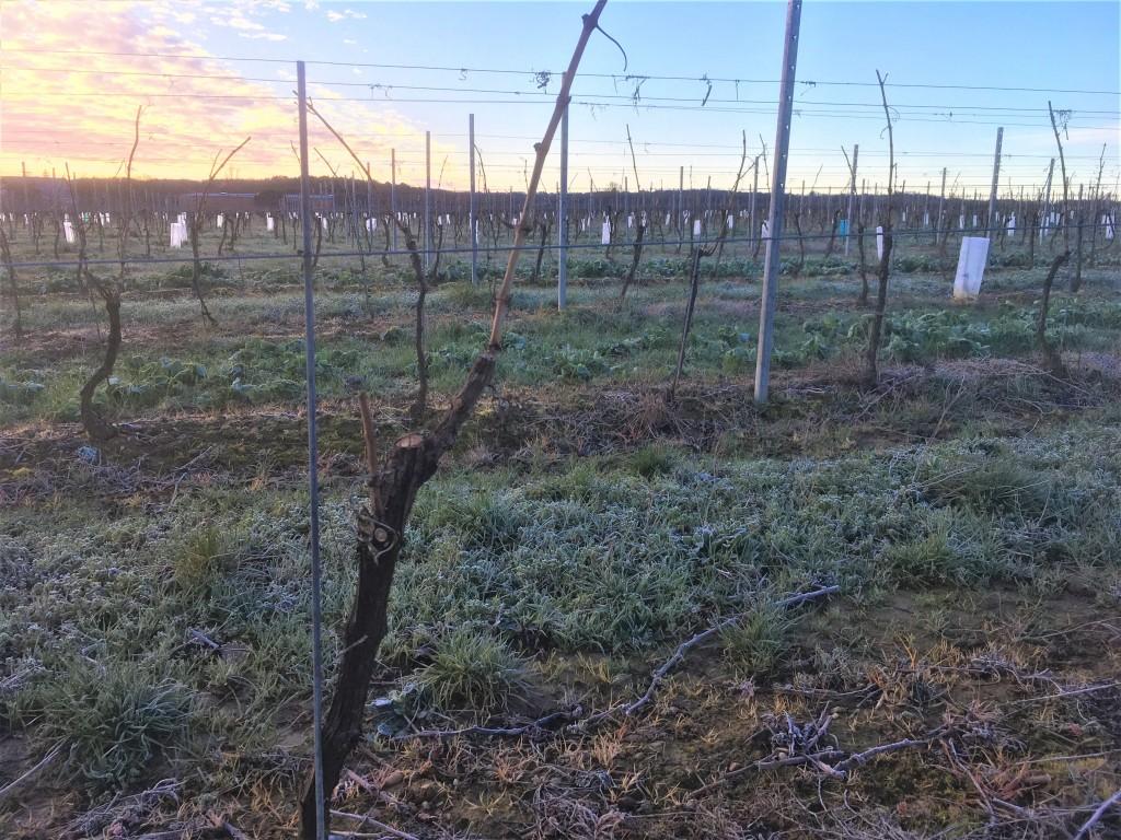 histoire du vin : Narbonne