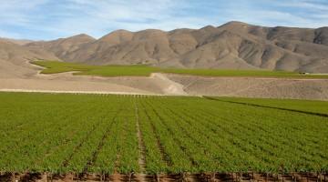 les vins chiliens