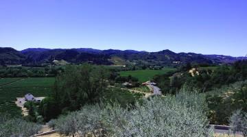 vignoble californien